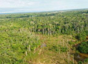 CIDH y ONU expresan preocupación por ley de carreteras en la Amazonía de Perú