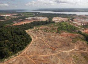 """Amazonía se acercaría a su punto de """"no retorno"""" por deforestación"""