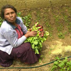 Agricultura, una actividad esencial de las comunidades sin apoyo estatal