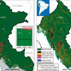 Reducción de bosques primarios continúa de manera progresiva