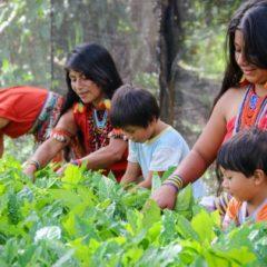 Declaramos a la naturaleza, los territorios, bosques y la biodiversidad como el HOSPITAL NATURAL DE LOS WAMPIS