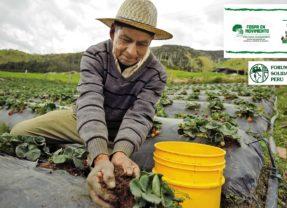 Alternativas de seguridad y soberanía alimentaria en la Amazonia frente al acaparamiento y destrucción de sus tierras